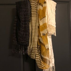 Collection of Fall & Winter Scarves